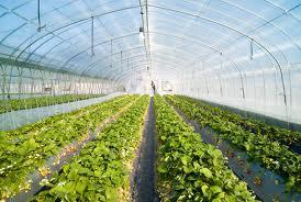 Cách viết dự án xin vốn sản xuất nông nghiệp