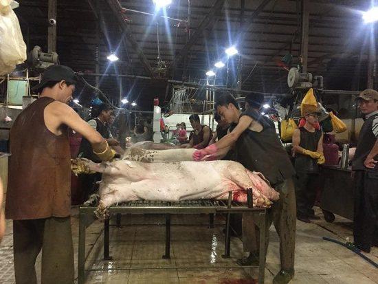 Huyện Trảng Bom và Nhơn Trạch tỉnh Đồng Nai công bố dịch tả heo Châu Phi