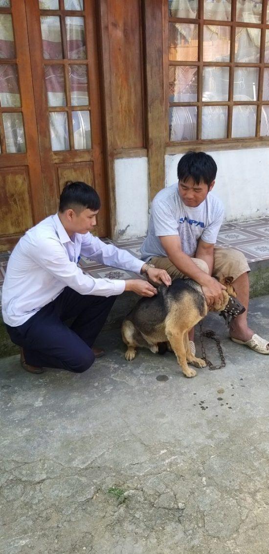 Lào Cai triển khai công tác tiêm phòng vắc xin  cho đàn gia súc, gia cầm đợt 1 năm 2021